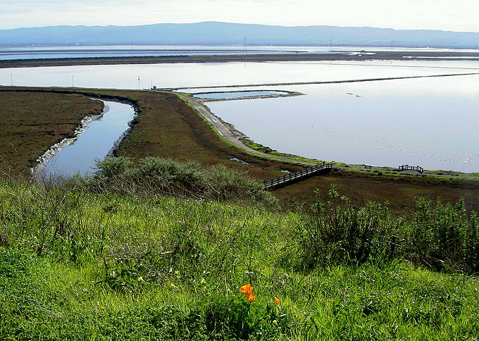Salt Ponds and Bay from DESFBNWR